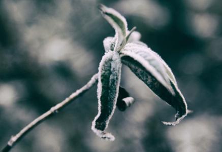 gefrorenderzweig by Ulrich Berens uli@berens.cc.
