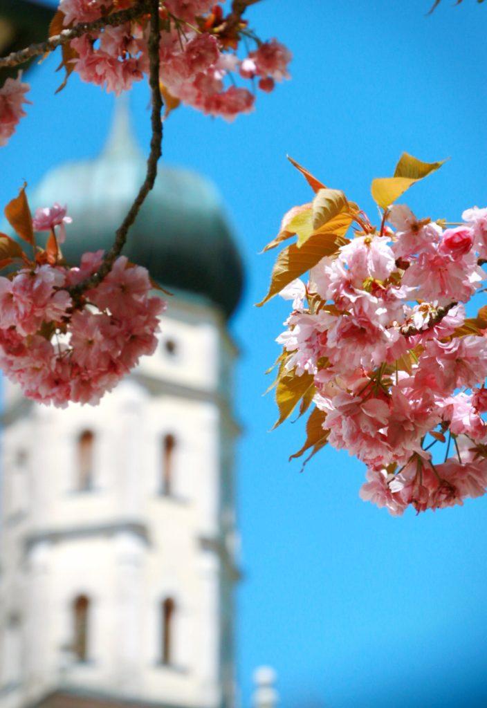 Kirschblüten vor dem Kirchturm des Klosters Mönchsdeggingen by Ulrich Berensuli@berens.cc.